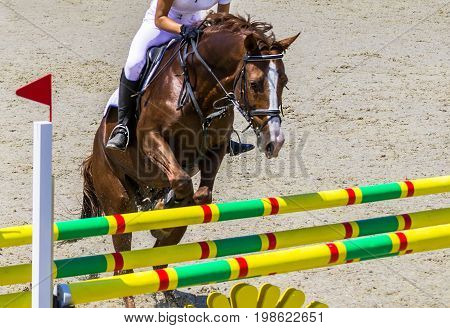 Chesnut dressage horse and woman in white uniform performing jump at show jumping competition. Equestrian sport background. Chesnut horse portrait during dressage competition.