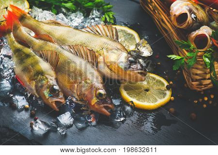 Fresh fish on ice with aromatic herbs, spices, salt. Raw perch fish on slate tray dark vintage background, top view, healthy food, cooking, diet, nutrition concept