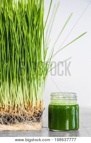 Wheatgrass Details Of The Roots, Seeds, Sprouts And Healthy Juice Shot
