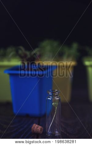 Rukkola plant in a test-tube, plant cultivation. Biotechnology of the future poster