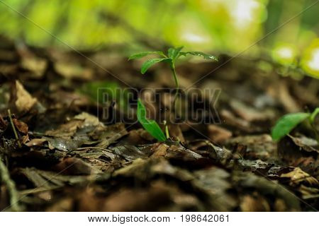 a single green plant on the forrest floor