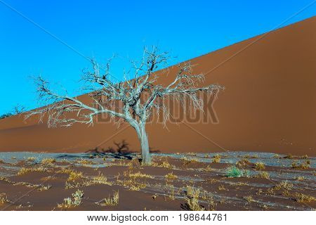 Giant yellow dune and small lonely tree in the Namib Desert. Fairy-tale world. Sunset, Namibia, South Africa. The concept of extreme and exotic tourism