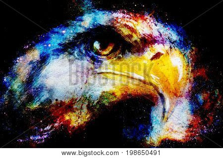 Eagle on abstract color background. Profile portratit