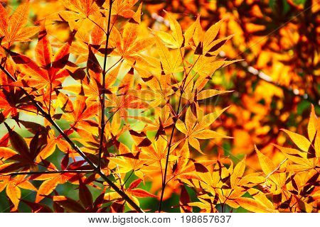 Oranges leaves over exposed with sunlight passing through them.