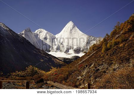 Shangri La, Panorama View Of Holy Snow-clad Mountain Jambeyang And Yellow Orange Autumn Trees In Val