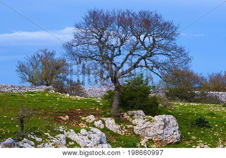 beautiful rural farm between stone walls. Apulia