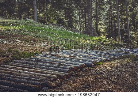 Wooden Mountain Bike Trail Or Footpath