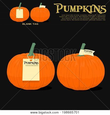 Isolated pumpkins with tag on black background