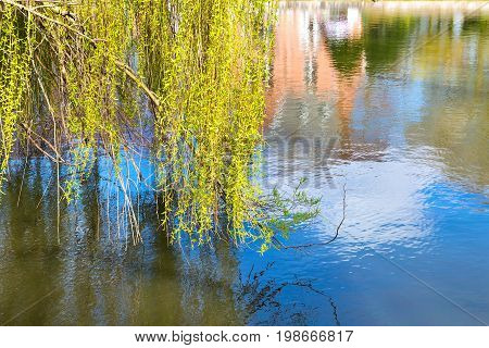 Willow tree by the water with reflection