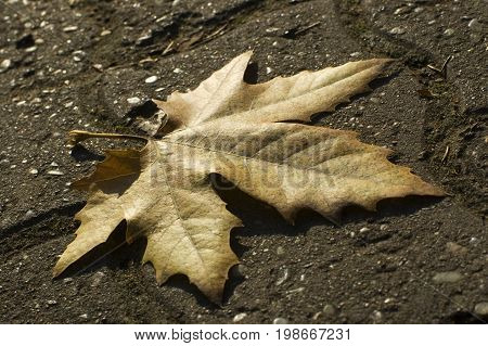 Yellow leaf on the concrete blocks, leaf on the road