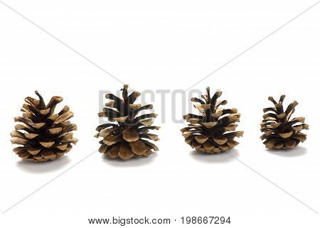 Line of Four Pine cones isolated on white background