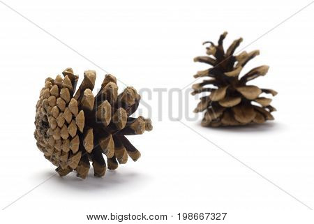 Two Pine cones isolated on white background