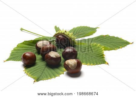 Horse chestnuts with thorns on the leaf isolated on white background