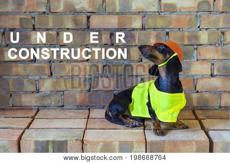 Dog builder dachshund in an orange construction helmet at the brick wall background With the inscription