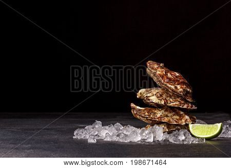 Close-up of three big beautiful oysters on a black background. Fresh sea mollusks full of nutrients. Closed seashells with glittering ice cubes and a lime segment. Expensive food. Copy space.