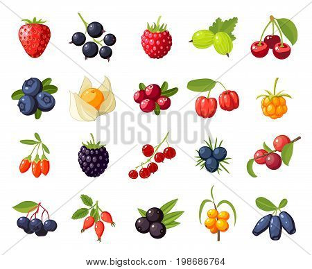 Set branches berries and leaves: cherry rose strawberry acai raspberry juniper cranberry cloudberry blueberries goji acerola blackberries currants honeysuckle. Vector flat icon isolated