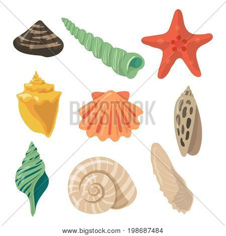 Summer tropical objects. Marine shells in cartoon style. Vector colored set of ocean cartoon shell and seashell illustration