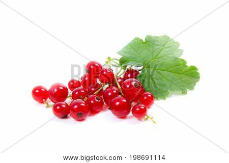 Red Currant Berry Isolated On White. A Bunch Of Red Currant..