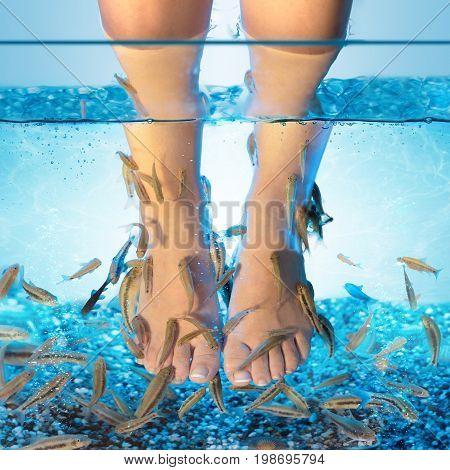 Rufa images illustrations vectors rufa stock photos for Fish pedicure nyc