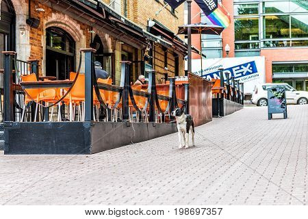 Quebec City Canada - May 29 2017: Saint Jean Baptiste area with gay friendly restaurant on Augustin street with menu sign sidewalk and sad black white dog on leash on cobblestone street