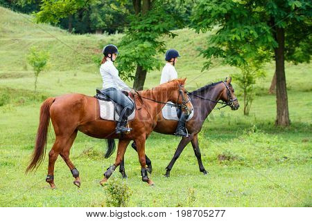 Two young women riding horse in park. Horse walk in summer