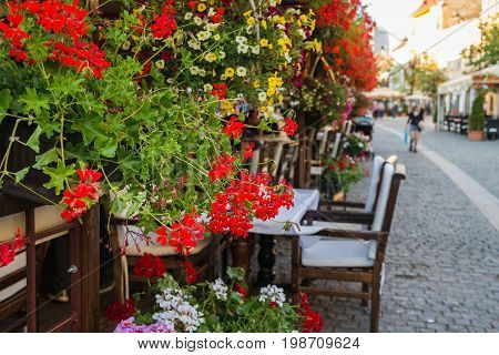 Street flowers reds geranium in outdoor restaurant at a Sibiu city Romania.
