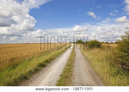 Limestone Track And Wheat Field