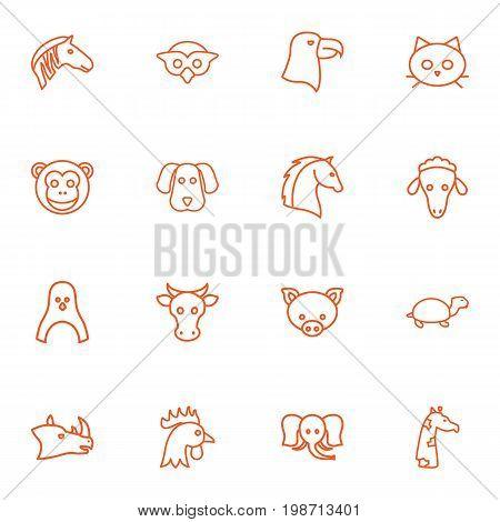 Set Of 16 Zoology Outline Icons Set