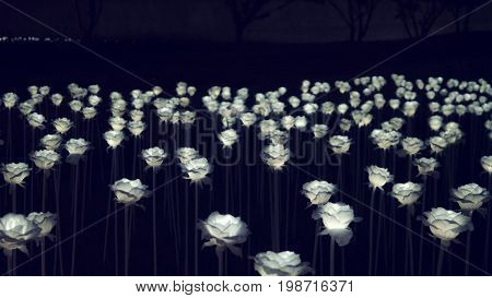 Seoul - July 2017: Glowing roses installation in front of Dongdaemun Design Plaza.