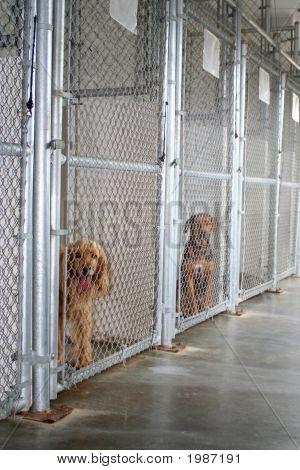 Animal Shelter Kennel