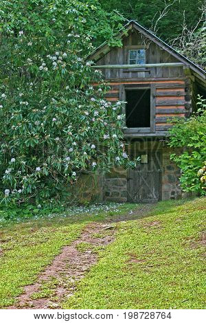 a small log cabin behind a blooming rhododendron