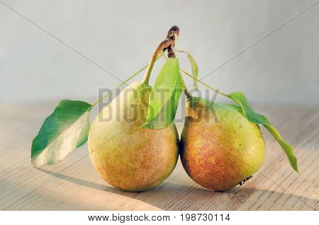 Paired fruit - two pears on one stalk with leaves. With drops of water lit by the sun on a wooden background. Toned image.