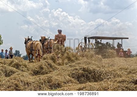 NEW HOLLAND PENNSYLVANIA - August 4 2017: A young Mennonite woman operates a hay tedder at Big Spring Farm Days. This is an annual event demonstrating traditional threshing and harvesting methods using restored antique and vintage tools.