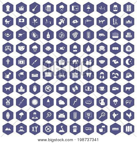 100 cow icons set in purple hexagon isolated vector illustration