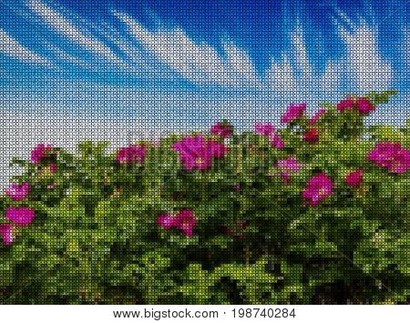 Illustrations. Cross-stitch. Bright scarlet flowers of rose hips against blue sky.