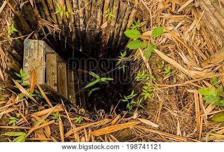 Man made hole in ground lined with bamboo poles with a ladder in the hole and surrounded by dead leaves and foliage.