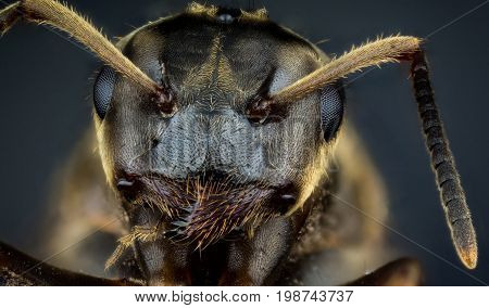 Detail of head of ant on dark background macro or micro photography