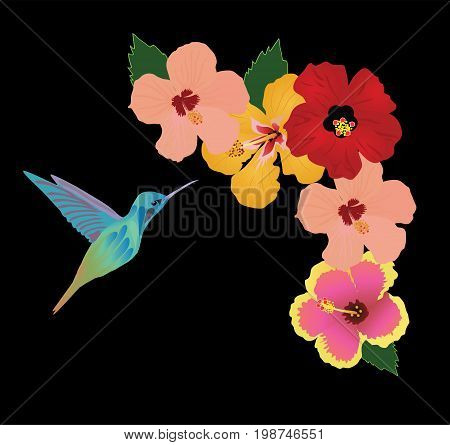 vector illustration of hummingbird and flowers background