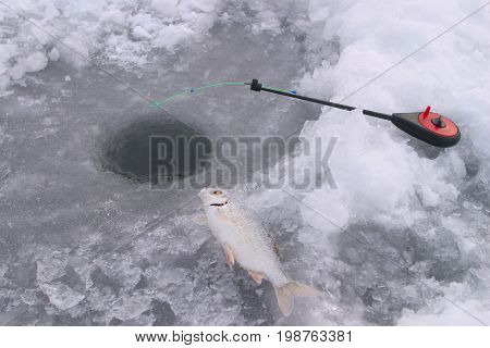 Fish On Ice River
