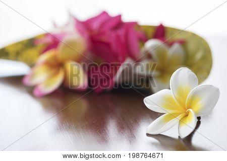 Plumeria Flowers On The Table