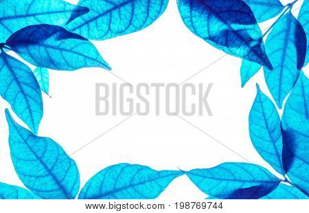 Closeup white space at the center of frame by art tone of blue leaves isolated on white background