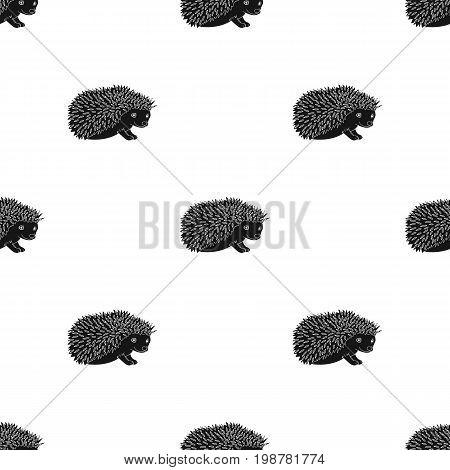 Hedgehog.Animals single icon in black style vector symbol stock illustration .
