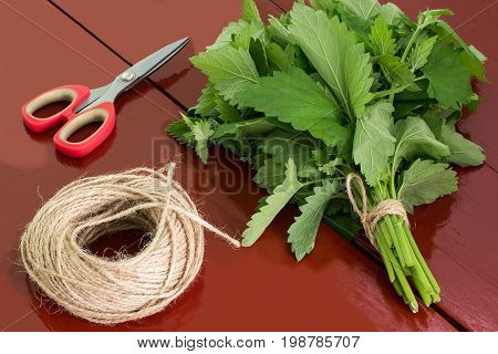 Binding of melissa officinalis in bundles for drying. Harvesting medicinal plants. Used in herbal medicine and cooking. Melissa scissors and twine on brown wooden table