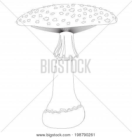 Fly agaric mushroom in contour isolated on white background. Vector
