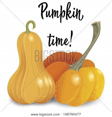 Two different orange pumpkin isolated on white background. Vector