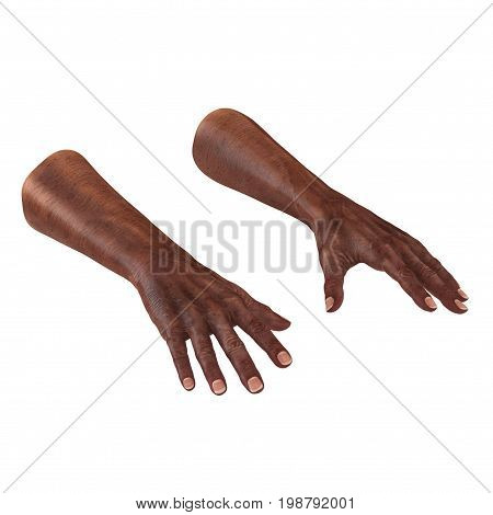 african hands of the old man isolated on a white background. 3D illustration