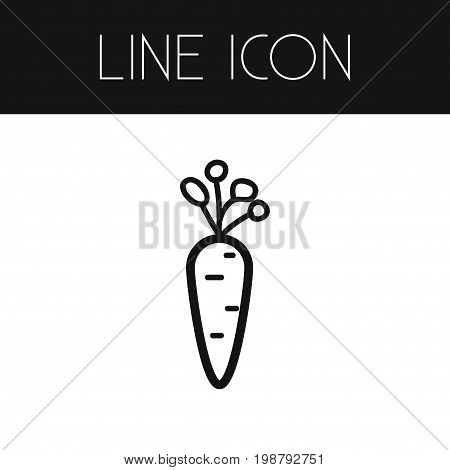 Carrot Vector Element Can Be Used For Carrot, Root, Vegetable Design Concept.  Isolated Root Vegetable Outline.
