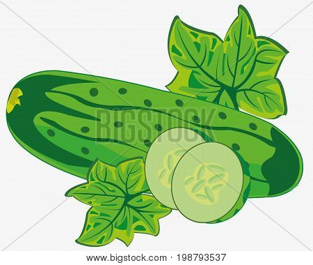 Ripe cucumber on white background is insulated