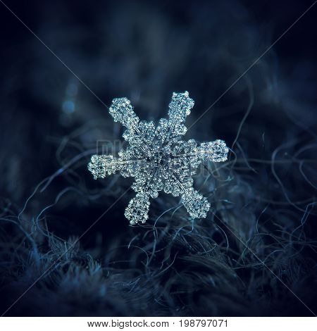 Real snowflake macro photo: large snow crystal with six simple, straight arms and large hexagonal center, completely covered by frozen bubbles of rime. Snowflake glowing on dark blue background.