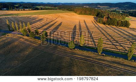 Aerial view of outdoor landscapes a row of trees throwing long shadows a balloon flies away. Summer evening on rural.